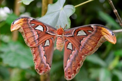 Begegnungen mit dem Reich der Steine_Schmetterling